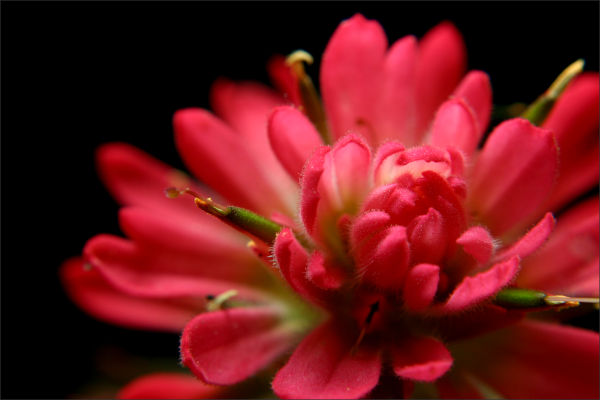 Desert Flower (I)