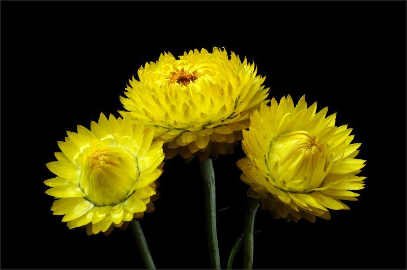 Happy Little Flower (2/3)