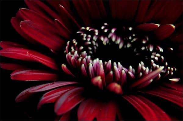 Deep Red (2/2)