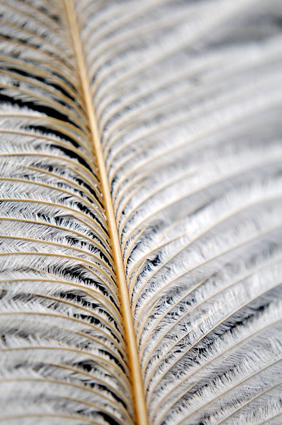 Feather Detail 5