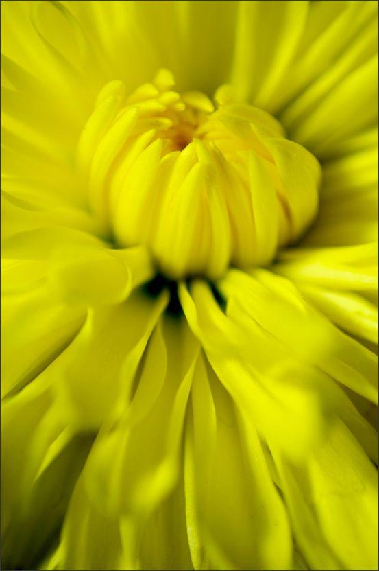 Yellow (1/2)