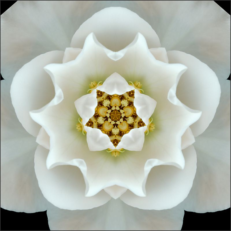 Floral Kaleidoscopes  (1/3)