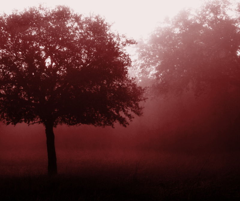 Blood Red Fog