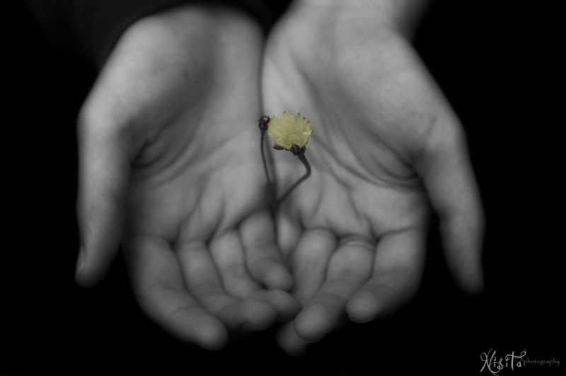 Flower in the hands