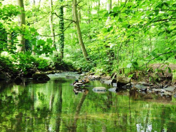 2 ducks in river