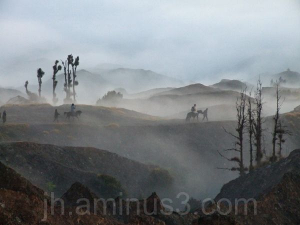 horses in Mount Bromo National Park