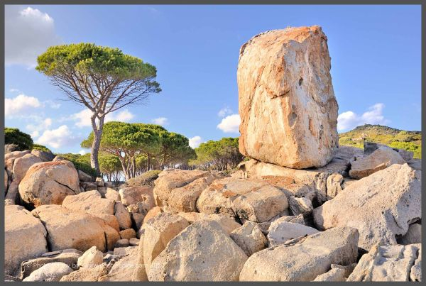 Trees and Boulders