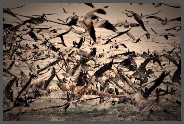 Panama City Pelican Dive