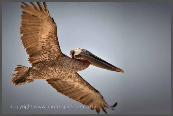 One Click - www.photo-spice.com