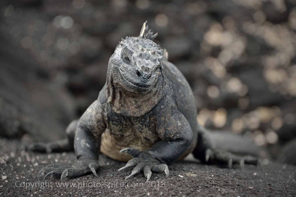 Galapagos - www.photo-spice.com