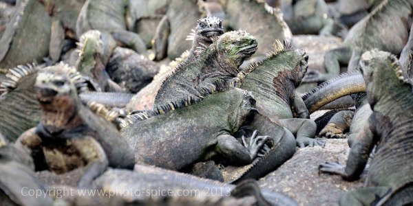 Galapagos - www.photo-spice.com