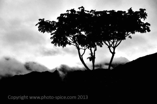 Photo-Spice.com 2015