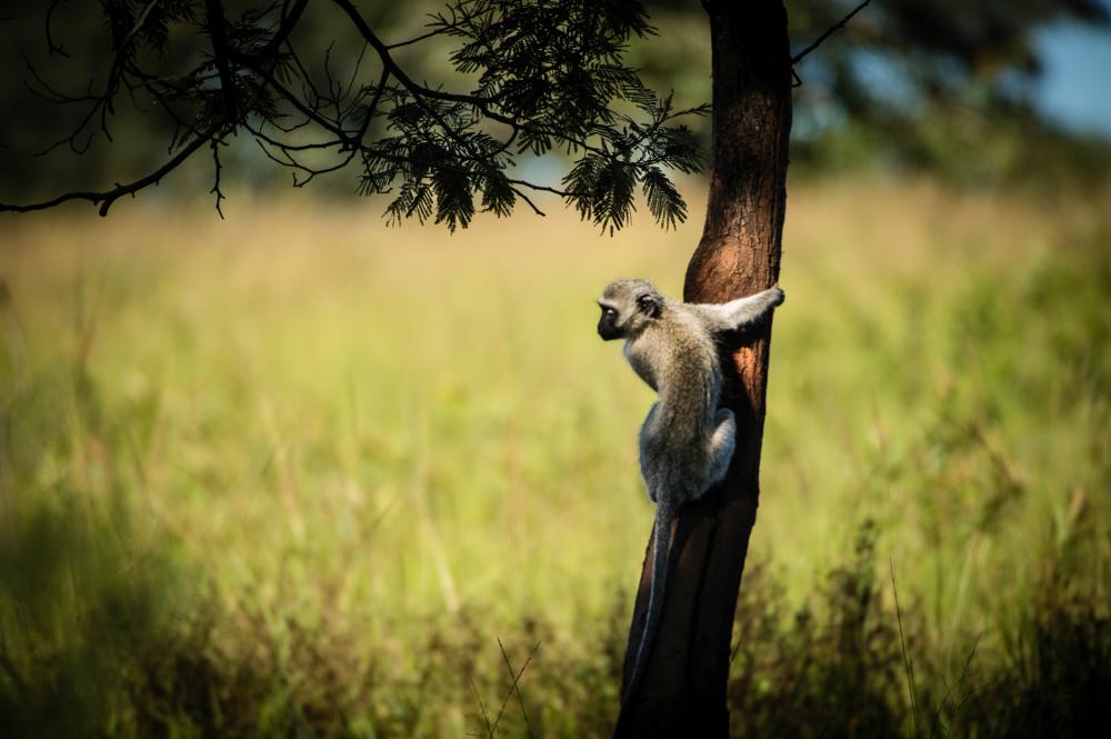 Photo-Spice.com in Africa