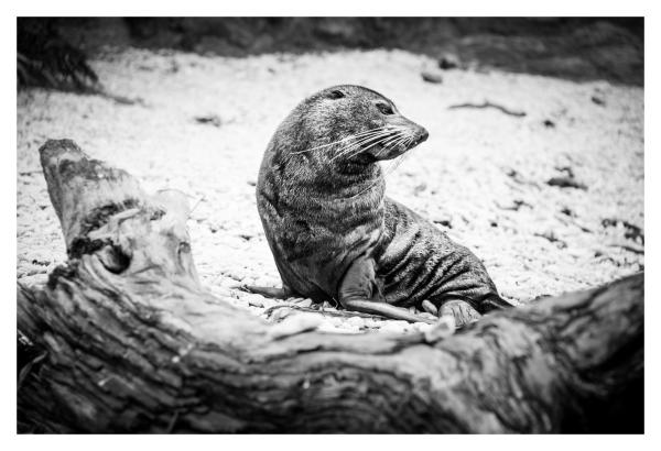 NZ seals
