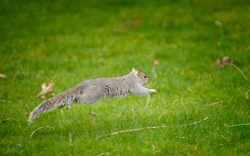 Squirrel Leap of Faith
