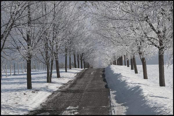A frosty driveway near Green Bluff.