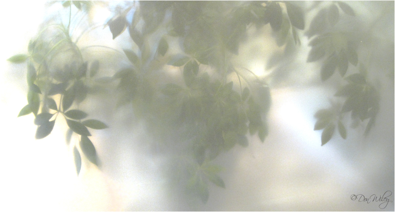 plant through frosted glass