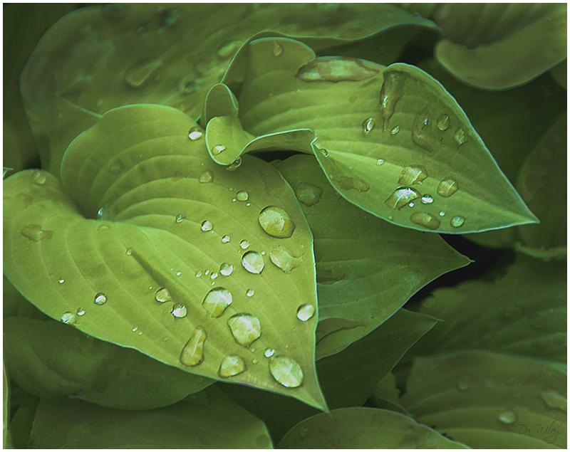 Droplets