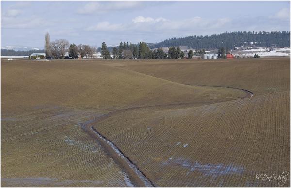 A Peone Field