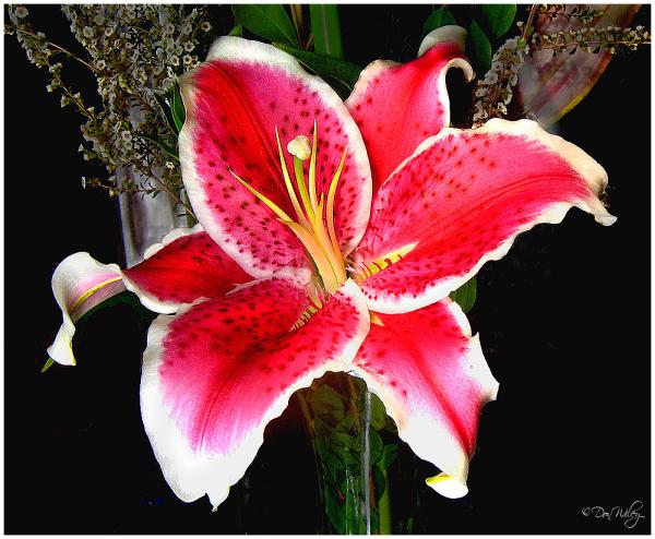 Cool Blossom
