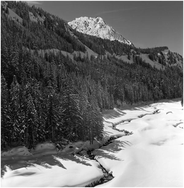 Trickle Creek