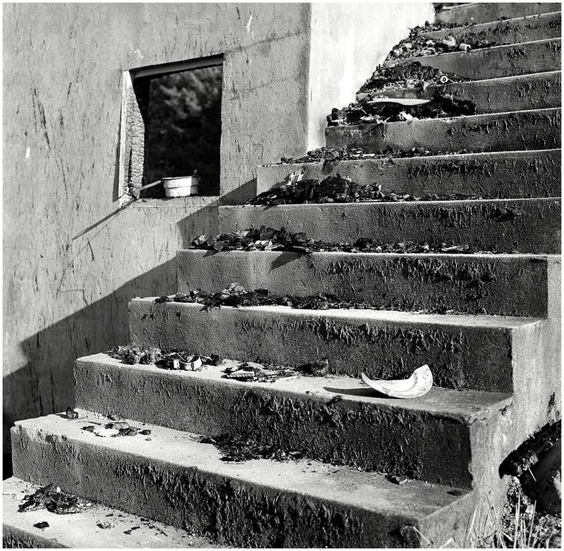 Debris Steps