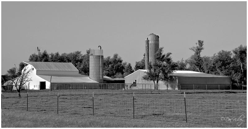 Amish Barnyard