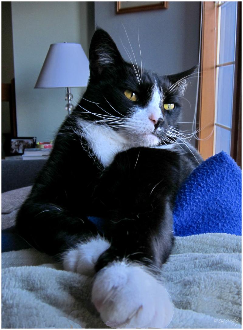 The Salzano cat