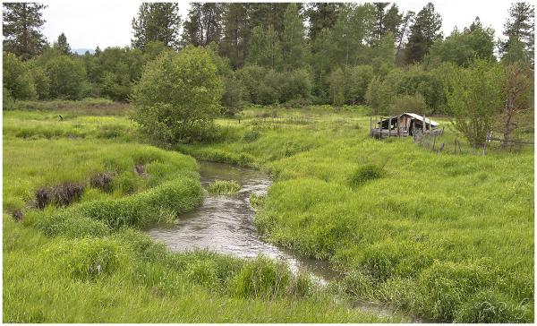 Dragoon Creek