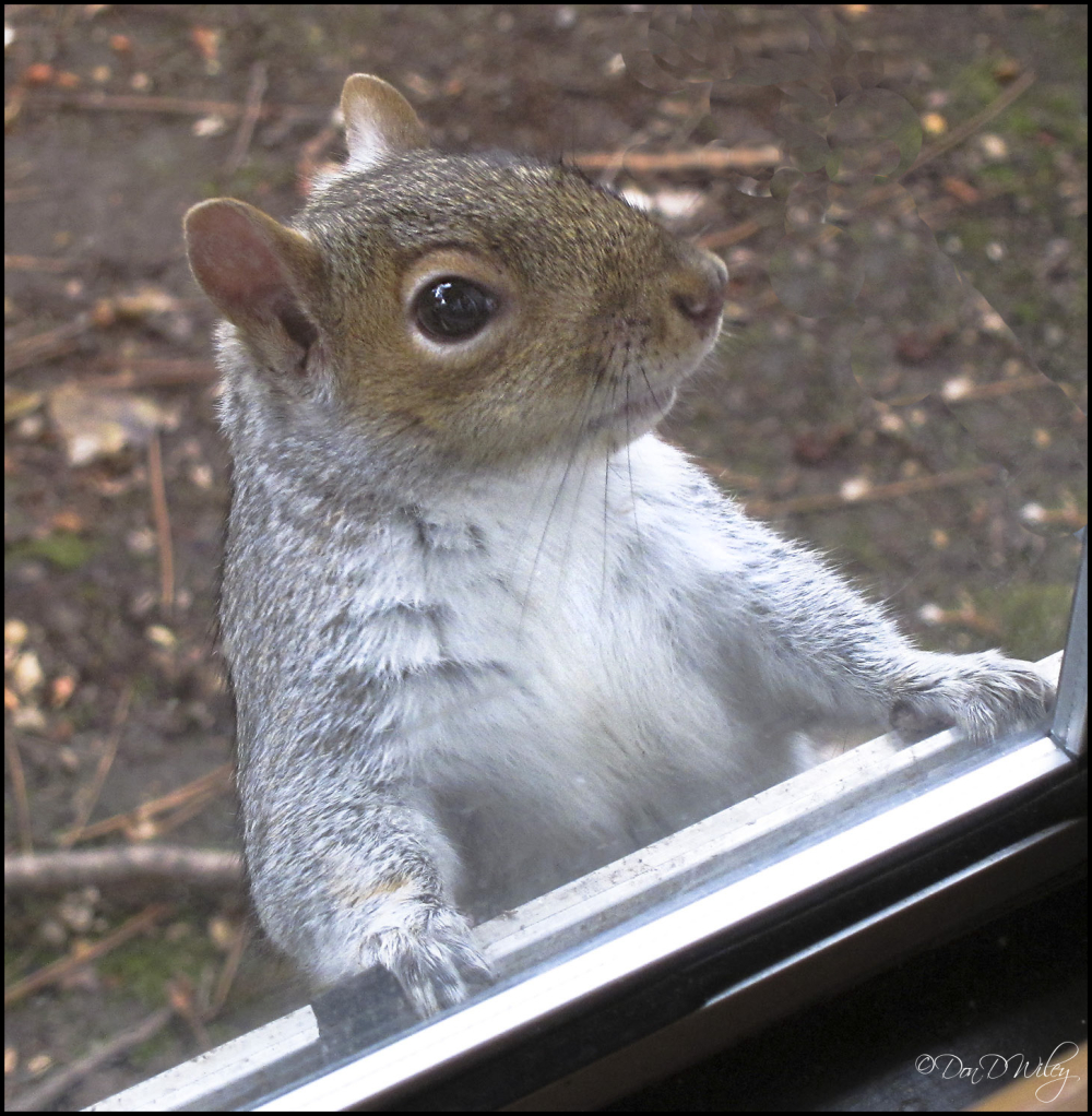 Nuts.....nuts now.....okay?
