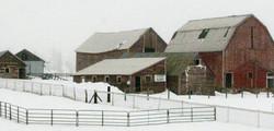 Snowy Barnyard