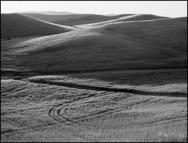 Palouse Hills