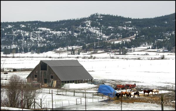 Colville Farm