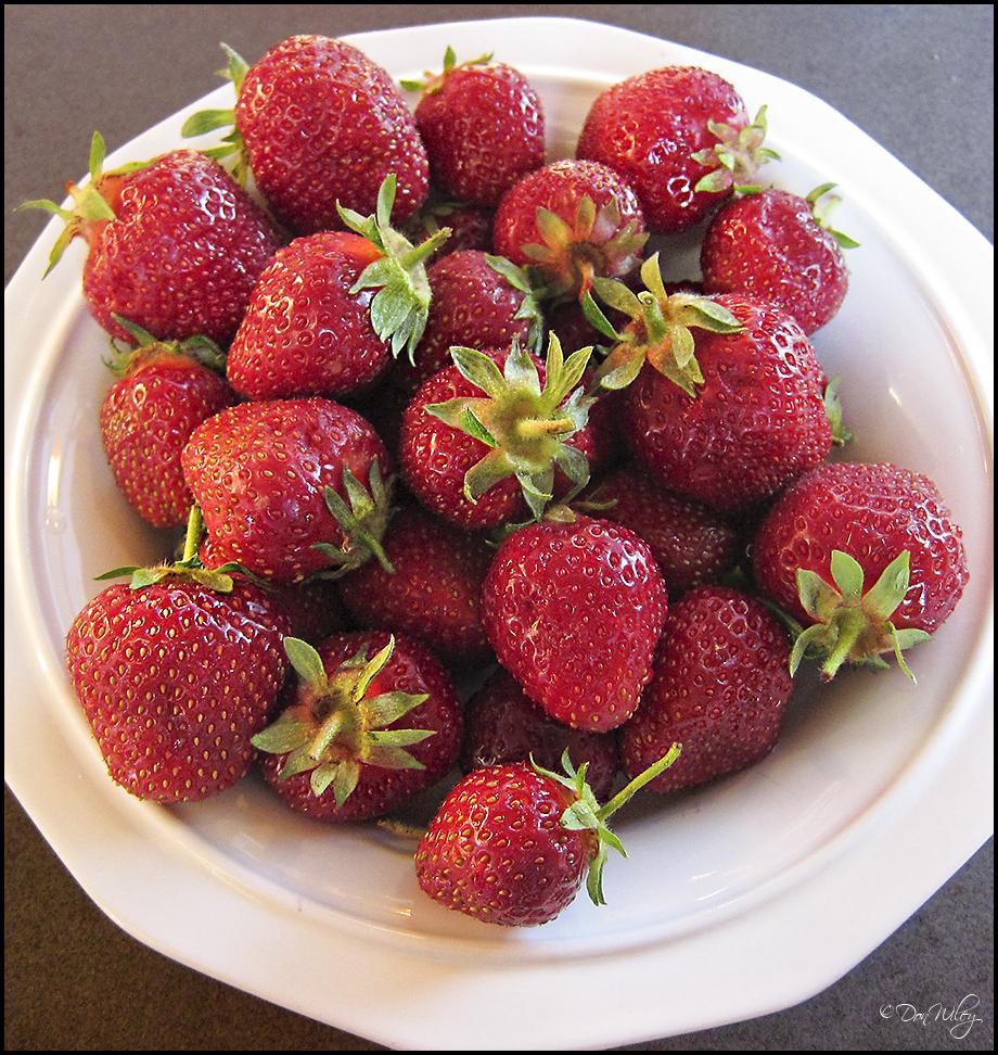 Green Bluff Strawberries