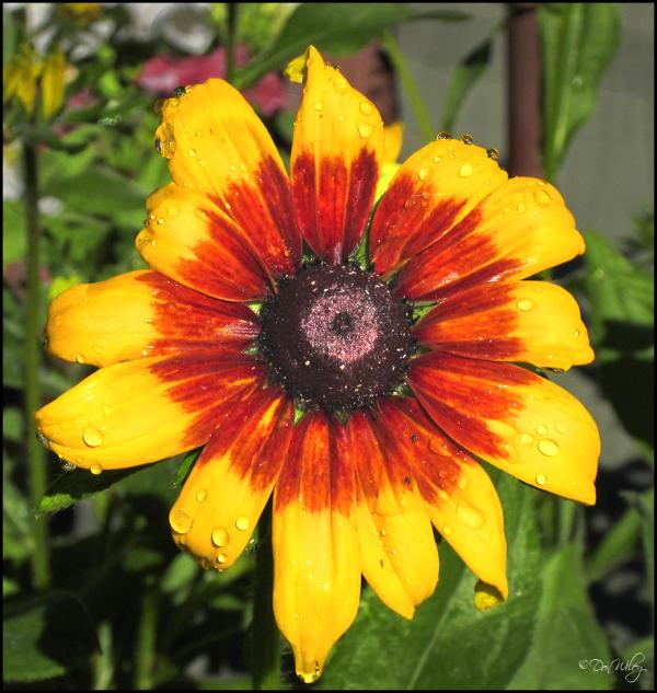 From David's Garden