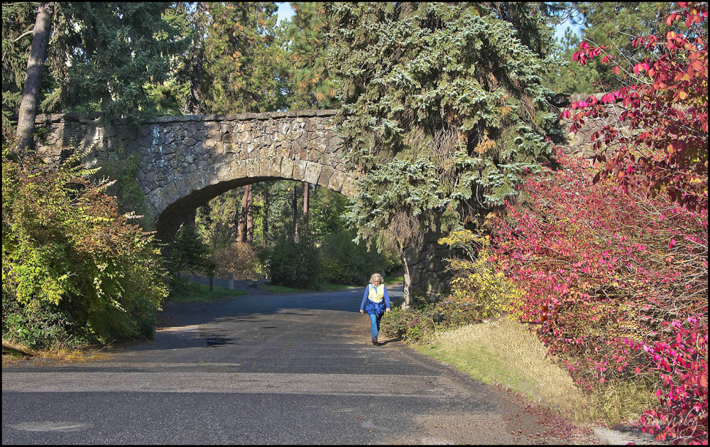 A Bridge in Manito Park