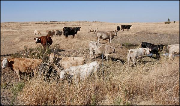 Pasture?