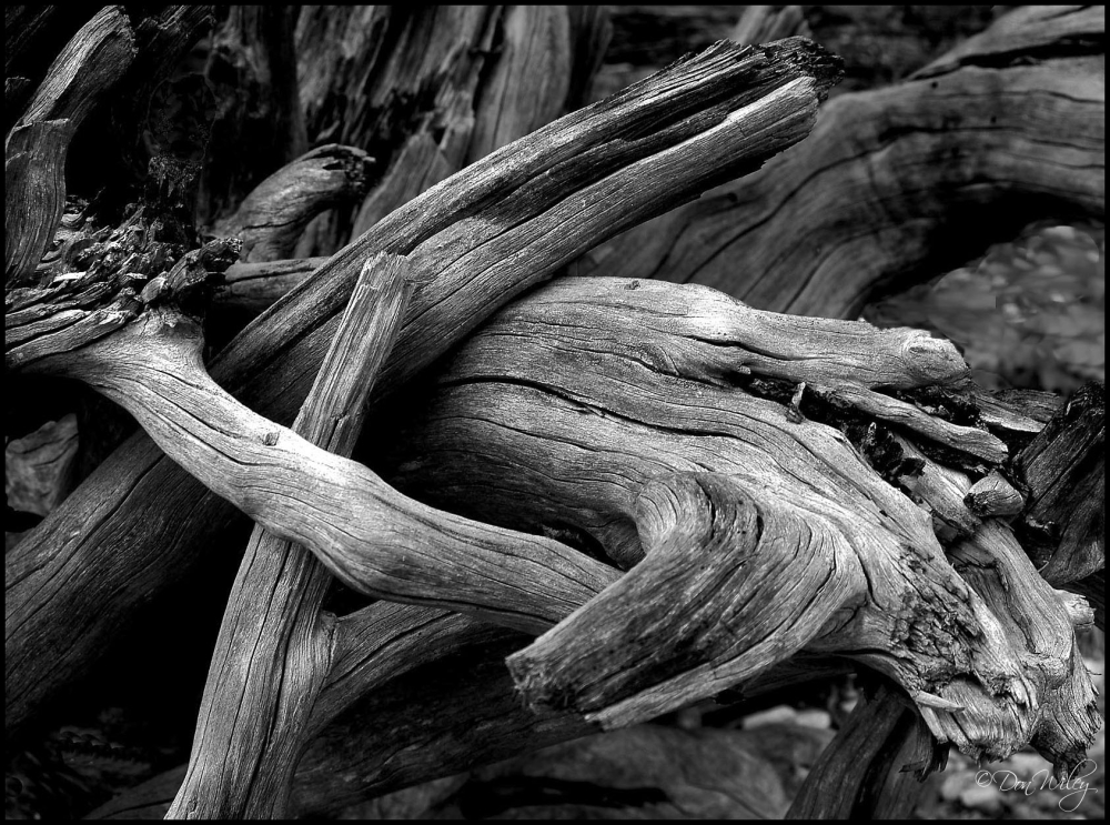Twisted Wood
