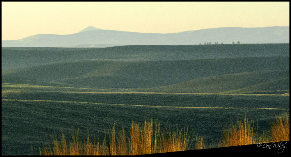 A Palouse view of Steptoe Butte