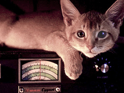 Amateur Radio Kitten