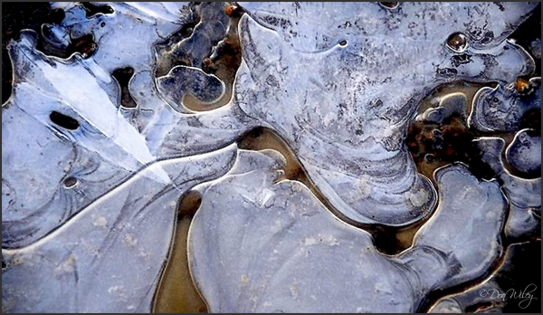 Puddle Ice