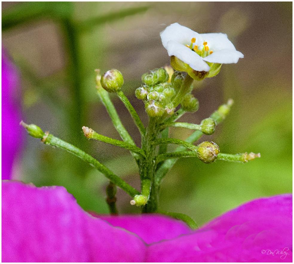 My Tiniest Flower