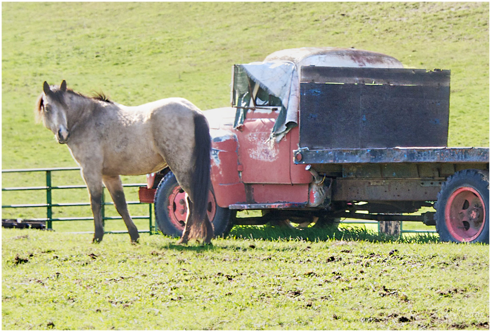One Horse Power