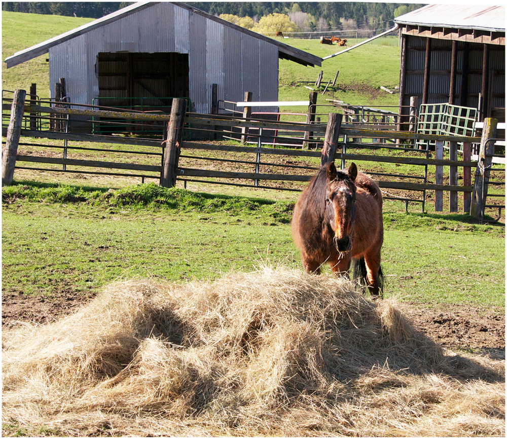 Some Hay!