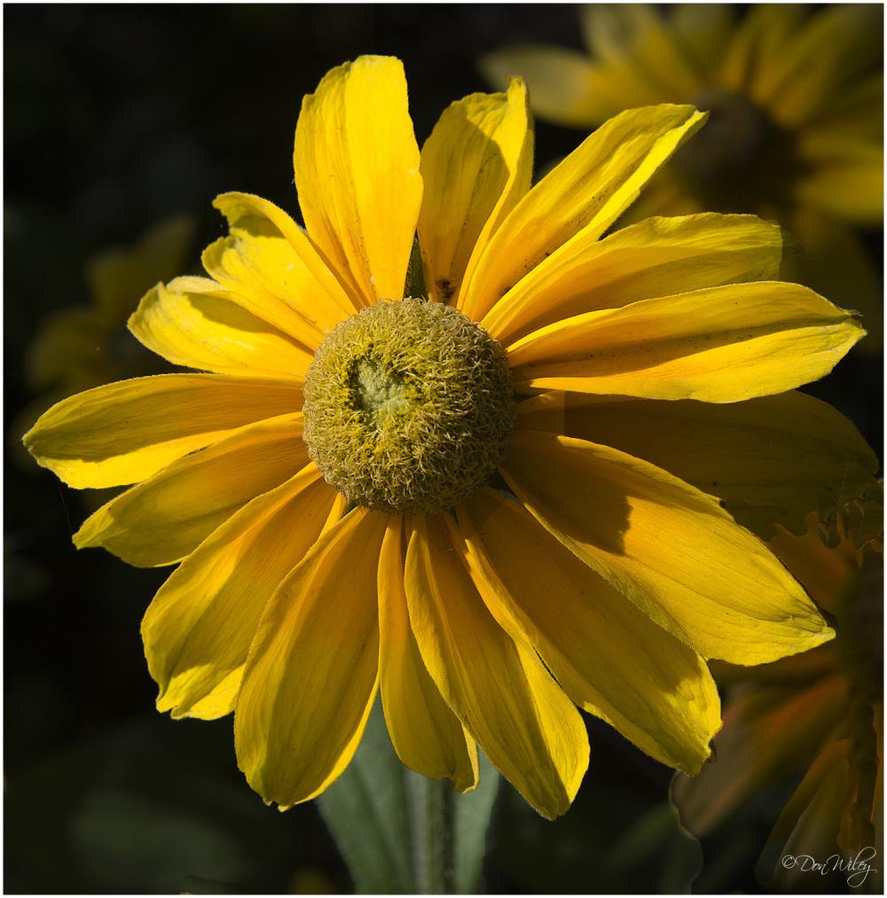 A Neighbor's Flower