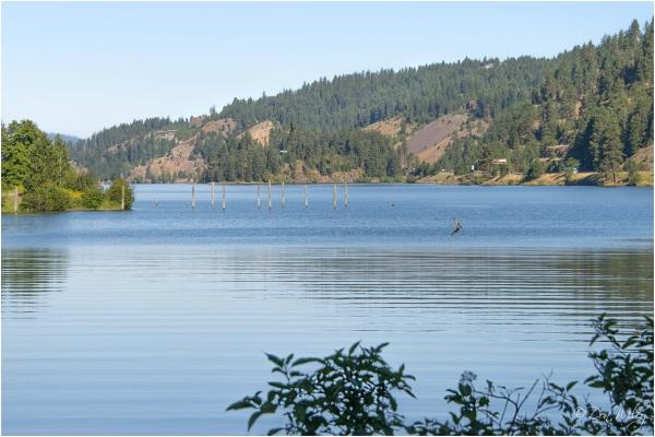An Osprey fishing on Lake Coeur d'Alene