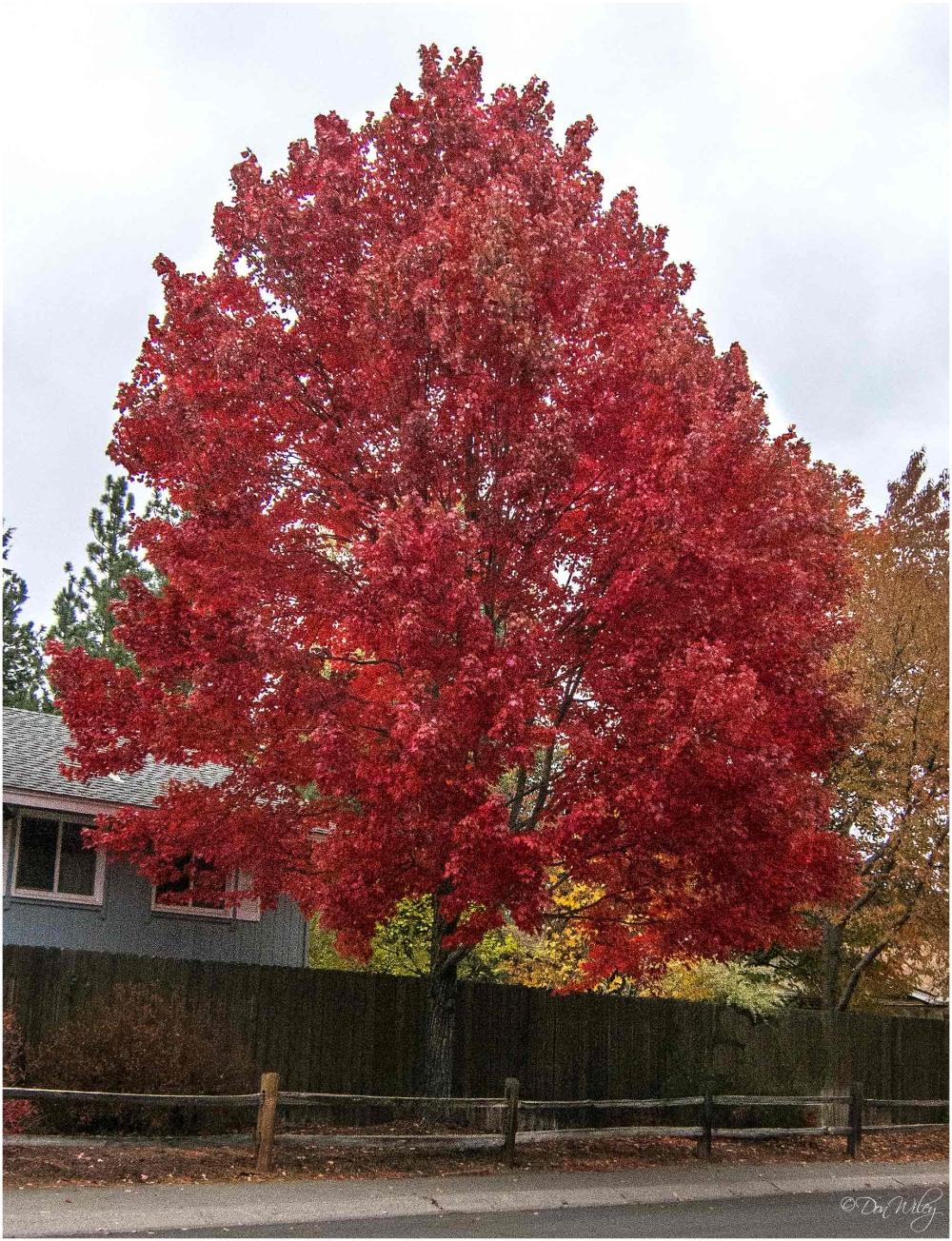Neighborhood Tree