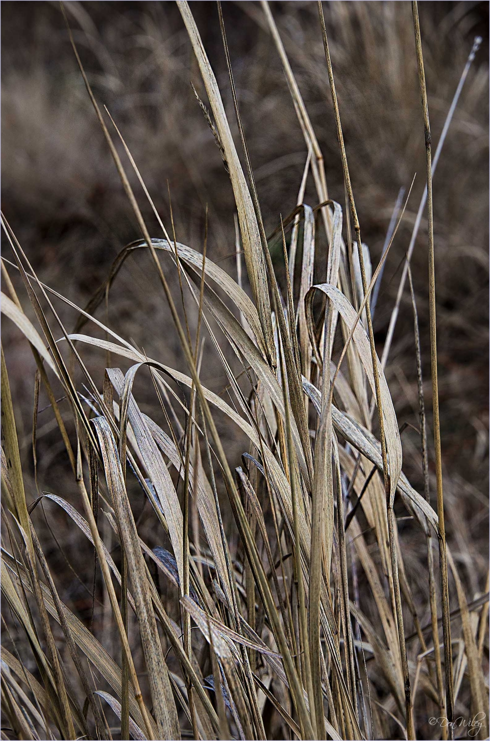 Turnbull Grass