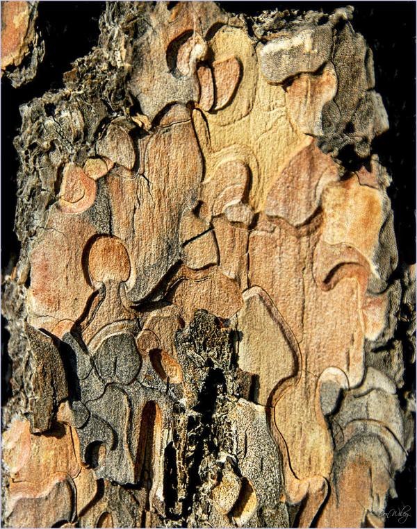 Inner bark