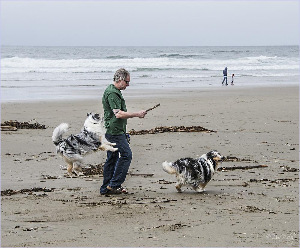 Dogs on Windy Beach